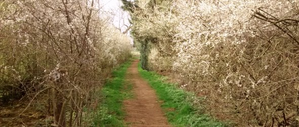 Spring Walking Route